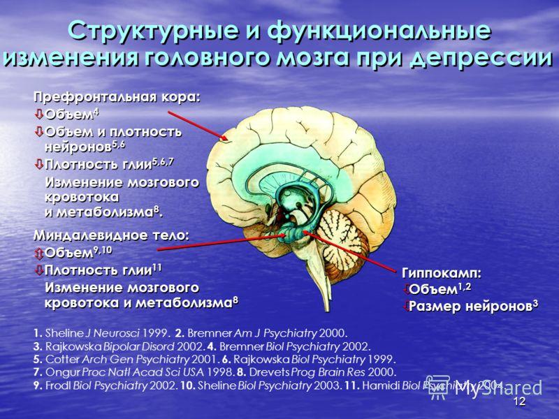 12 Структурные и функциональные изменения головного мозга при депрессии Префронтальная кора: Объем 4 Объем и плотность нейронов 5,6 Плотность глии 5,6,7 Изменение мозгового кровотока и метаболизма 8. Префронтальная кора: Объем 4 Объем и плотность ней