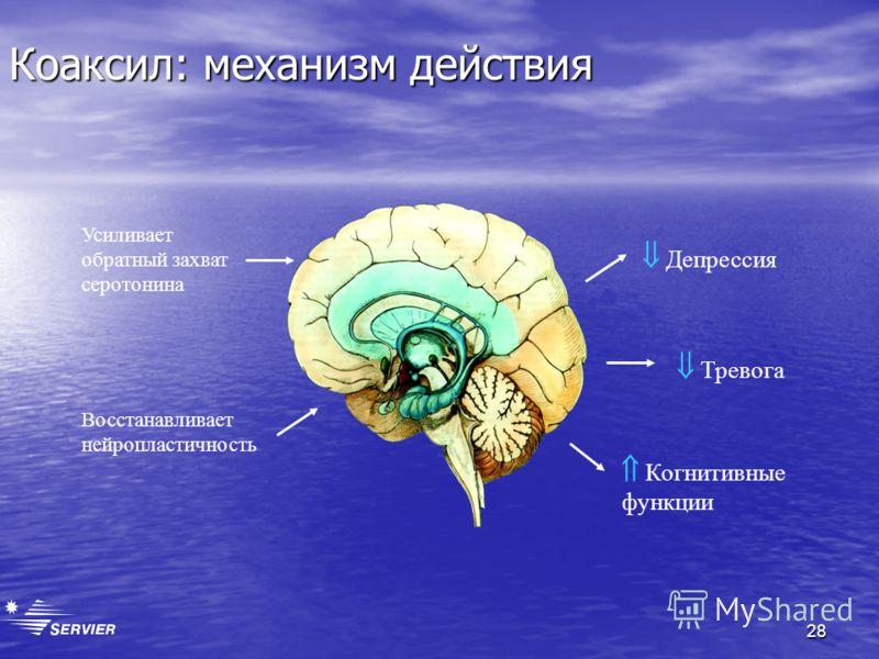 28 Коаксил: механизм действия Усиливает обратный захват серотонина Восстанавливает нейропластичность Депрессия Тревога Когнитивные функции