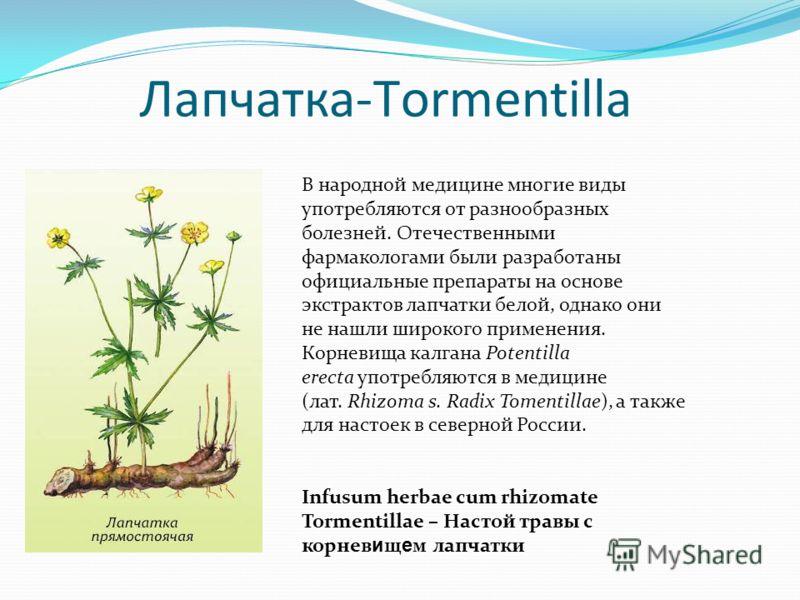 Лапчатка-Тormentilla В народной медицине многие виды употребляются от разнообразных болезней. Отечественными фармакологами были разработаны официальные препараты на основе экстрактов лапчатки белой, однако они не нашли широкого применения. Корневища