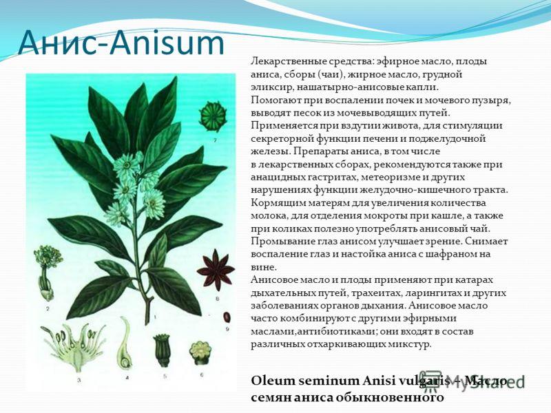 Анис-Anisum Лекарственные средства: эфирное масло, плоды аниса, сборы (чаи), жирное масло, грудной эликсир, нашатырно-анисовые капли. Помогают при воспалении почек и мочевого пузыря, выводят песок из мочевыводящих путей. Применяется при вздутии живот