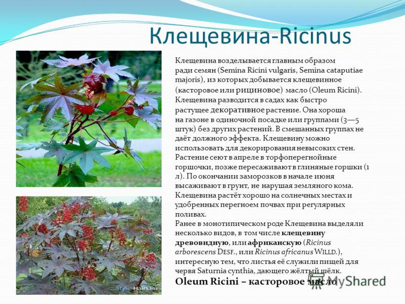 Клещевина-Ricinus Клещевина возделывается главным образом ради семян (Semina Ricini vulgaris, Semina cataputiae majoris), из которых добывается клещевинное (касторовое или рициновое ) масло (Oleum Ricini). Клещевина разводится в садах как быстро раст