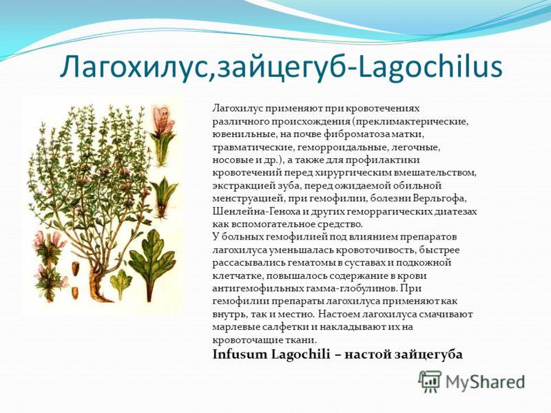 Лагохилус,зайцегуб-Lagochilus Лагохилус применяют при кровотечениях различного происхождения (преклимактерические, ювенильные, на почве фиброматоза матки, травматические, геморроидальные, легочные, носовые и др.), а также для профилактики кровотечени