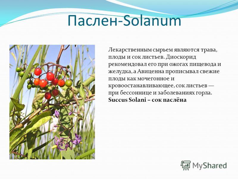 Паслен-Solanum Лекарственным сырьем являются трава, плоды и сок листьев. Диоскорид рекомендовал его при ожогах пищевода и желудка, а Авиценна прописывал свежие плоды как мочегонное и кровоостанавливающее, сок листьев при бессоннице и заболеваниях гор