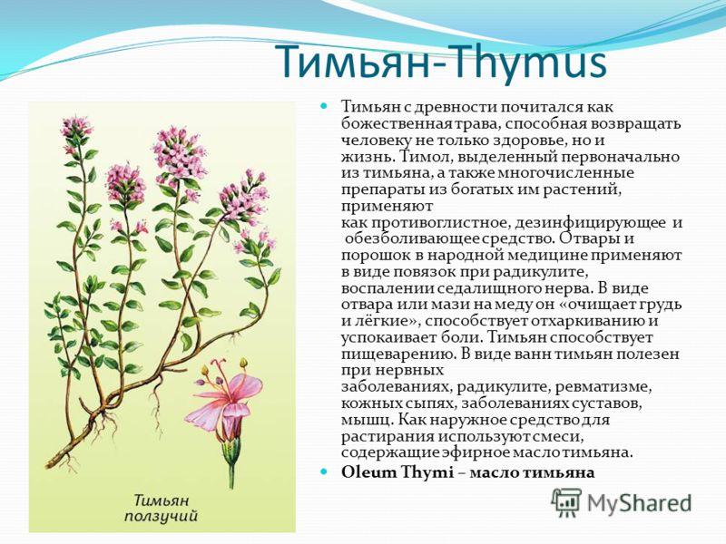 Тимьян-Thymus Тимьян с древности почитался как божественная трава, способная возвращать человеку не только здоровье, но и жизнь. Тимол, выделенный первоначально из тимьяна, а также многочисленные препараты из богатых им растений, применяют как против