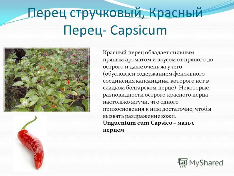 Перец стручковый, Красный Перец- Capsicum Красный перец обладает сильным пряным ароматом и вкусом от пряного до острого и даже очень жгучего (обусловлен содержанием фенольного соединения капсаицина, которого нет в сладком болгарском перце). Некоторые