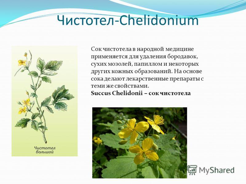 Чистотел-Chelidonium Сок чистотела в народной медицине применяется для удаления бородавок, сухих мозолей, папиллом и некоторых других кожных образований. На основе сока делают лекарственные препараты с теми же свойствами. Succus Chelidonii – сок чист