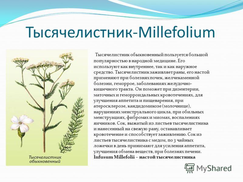 Тысячелистник-Millefolium Тысячелистник обыкновенный пользуется большой популярностью в народной медицине. Его используют как внутреннее, так и как наружное средство. Тысячелистник заживляет раны, его настой применяют при болезнях почек, желчекаменно