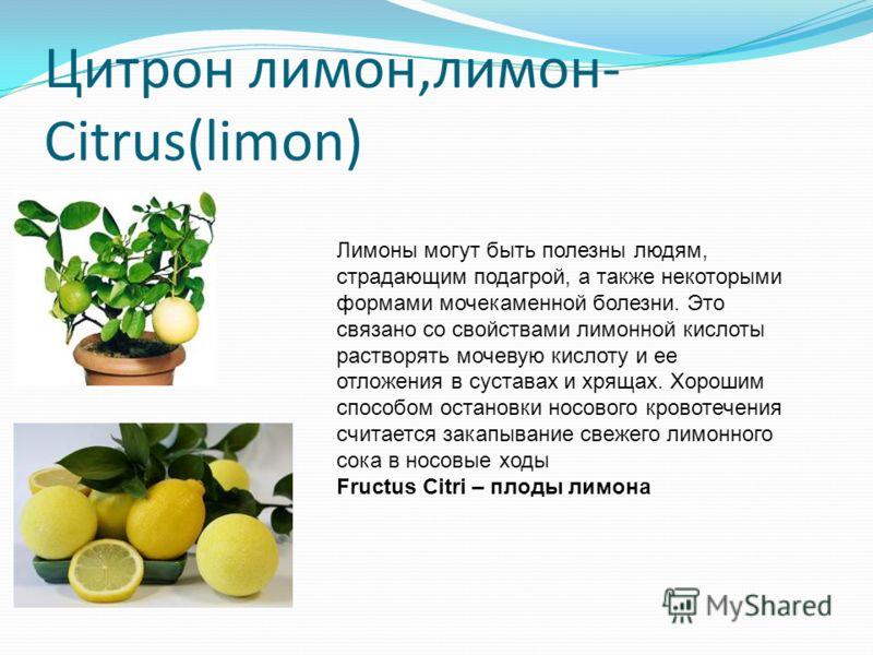Цитрон лимон,лимон- Citrus(limon) Лимоны могут быть полезны людям, страдающим подагрой, а также некоторыми формами мочекаменной болезни. Это связано со свойствами лимонной кислоты растворять мочевую кислоту и ее отложения в суставах и хрящах. Хорошим