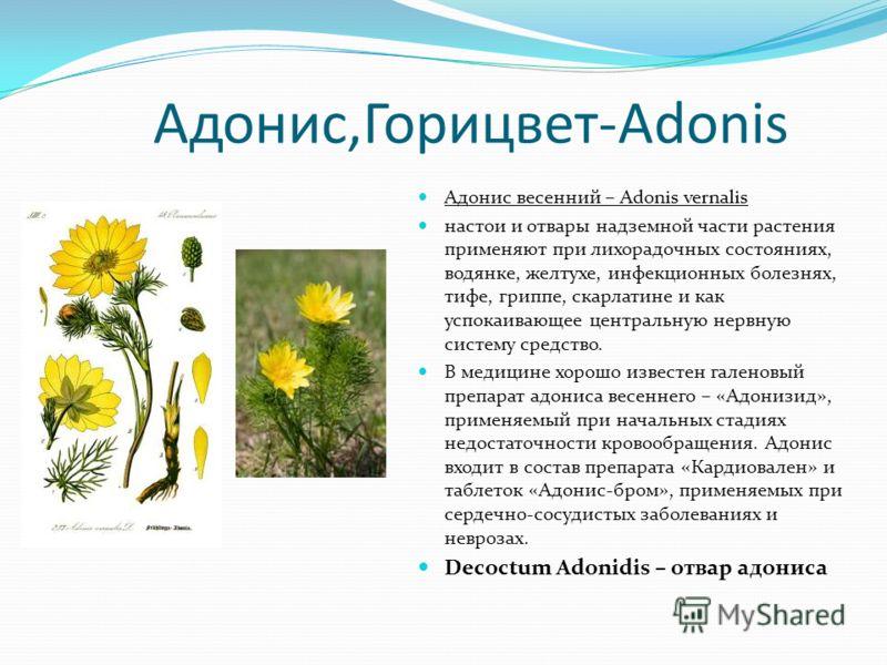 Адонис,Горицвет-Adonis Адонис весенний – Adonis vernalis настои и отвары надземной части растения применяют при лихорадочных состояниях, водянке, желтухе, инфекционных болезнях, тифе, гриппе, скарлатине и как успокаивающее центральную нервную систему