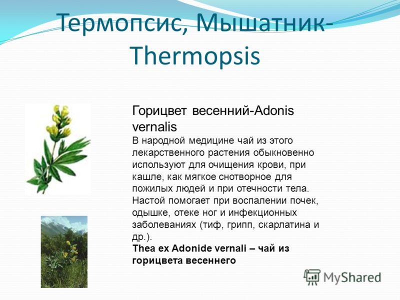 Термопсис, Мышатник- Thermopsis Горицвет весенний-Adonis vernalis В народной медицине чай из этого лекарственного растения обыкновенно используют для очищения крови, при кашле, как мягкое снотворное для пожилых людей и при отечности тела. Настой помо