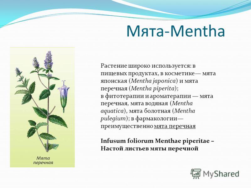 Мята-Mentha Растение широко используется: в пищевых продуктах, в косметике мята японская (Mentha japonica) и мята перечная (Mentha piperita); в фитотерапии и ароматерапии мята перечная, мята водяная (Mentha aquatica), мята болотная (Mentha pulegium);