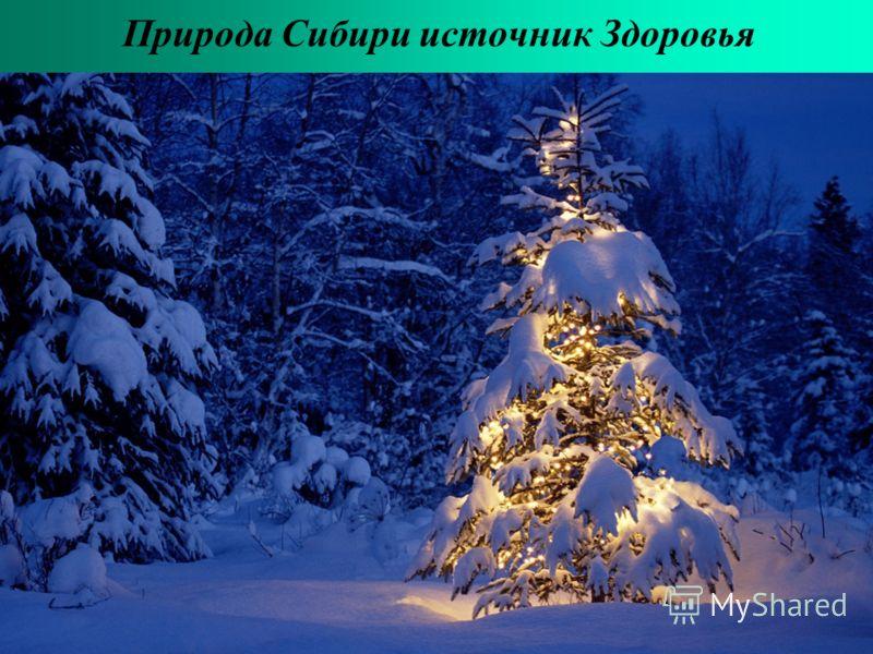 Природа Сибири источник Здоровья
