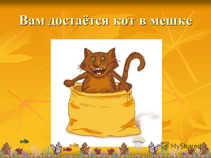 Вам достаётся кот в мешке