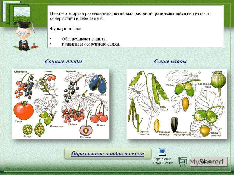 Сочные плоды Сухие плоды Образование плодов и семян