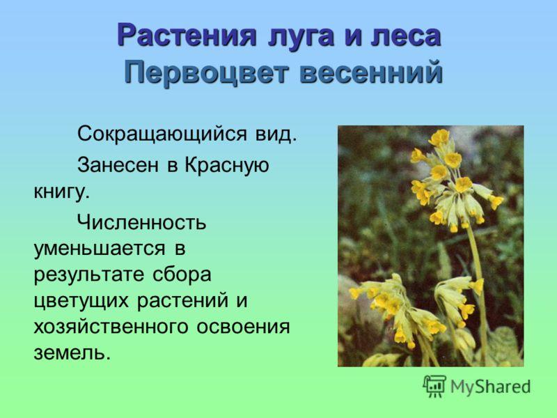 Растения луга и леса Первоцвет весенний Сокращающийся вид. Занесен в Красную книгу. Численность уменьшается в результате сбора цветущих растений и хозяйственного освоения земель.