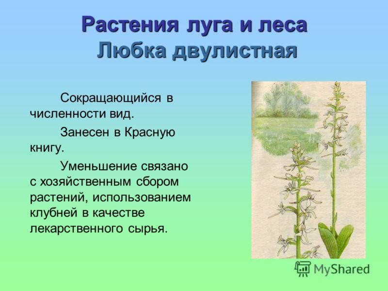 Растения луга и леса Любка двулистная Сокращающийся в численности вид. Занесен в Красную книгу. Уменьшение связано с хозяйственным сбором растений, использованием клубней в качестве лекарственного сырья.
