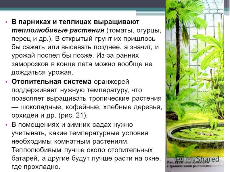 В парниках и теплицах выращивают теплолюбивые растения (томаты, огурцы, перец и др.). В открытый грунт их пришлось бы сажать или высевать позднее, а значит, и урожай поспел бы позже. Из-за ранних заморозков в конце лета можно вообще не дождаться урож