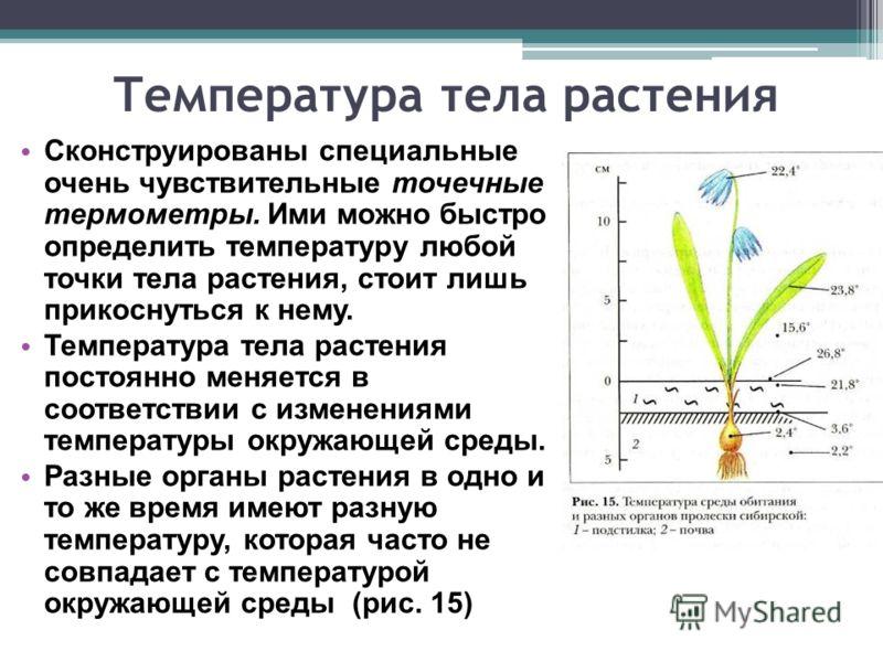 Температура тела растения Сконструированы специальные очень чувствительные точечные термометры. Ими можно быстро определить температуру любой точки тела растения, стоит лишь прикоснуться к нему. Температура тела растения постоянно меняется в соответс