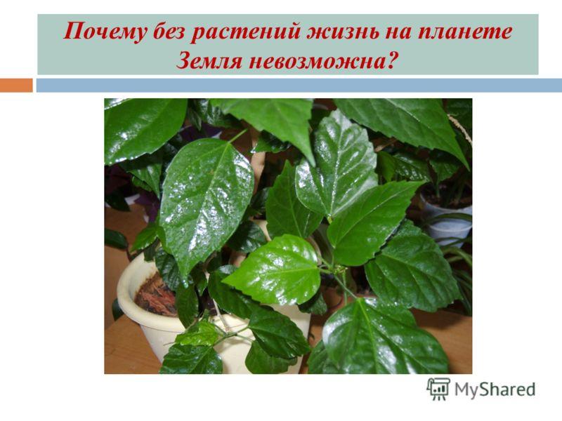 Почему без растений жизнь на планете Земля невозможна?