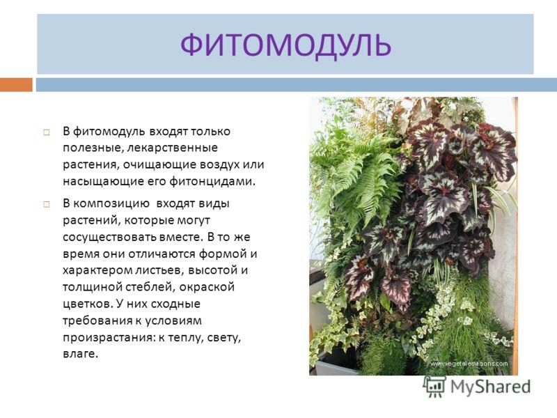 ФИТОМОДУЛЬ В фитомодуль входят только полезные, лекарственные растения, очищающие воздух или насыщающие его фитонцидами. В композицию входят виды растений, которые могут сосуществовать вместе. В то же время они отличаются формой и характером листьев,