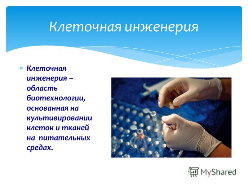 Клеточная инженерия – область биотехнологии, основанная на культивировании клеток и тканей на питательных средах. Клеточная инженерия