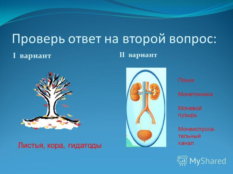 Проверь ответ на второй вопрос: I вариант II вариант Листья, кора, гидатоды Почки Мочеточники Мочевой пузырь Мочеиспуска- тельный канал