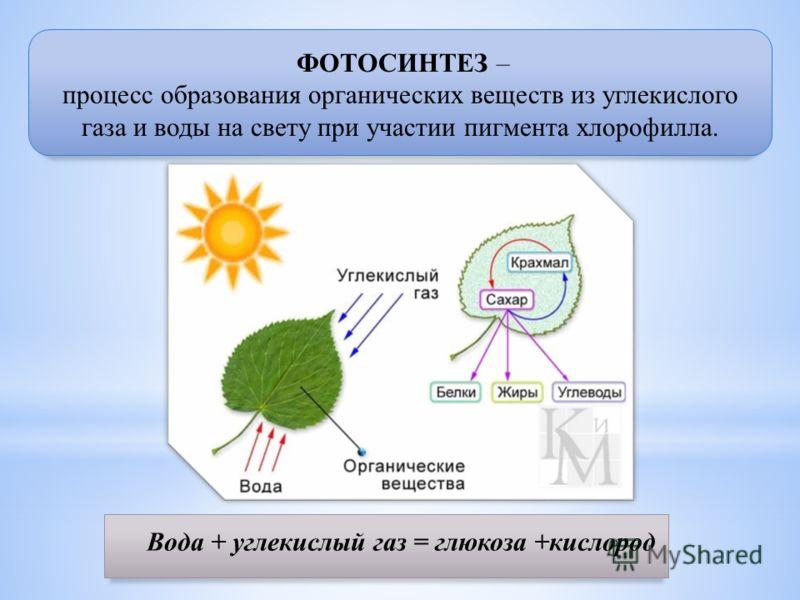 ФОТОСИНТЕЗ – процесс образования органических веществ из углекислого газа и воды на свету при участии пигмента хлорофилла. Вода + углекислый газ = глюкоза +кислород