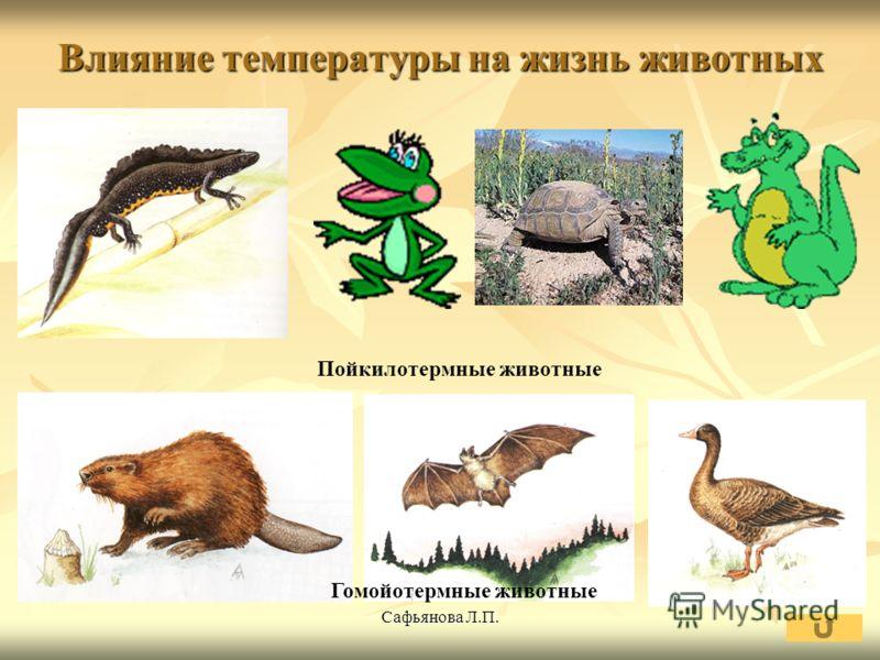 Сафьянова Л.П. Влияние температуры на жизнь животных Пойкилотермные животные Гомойотермные животные