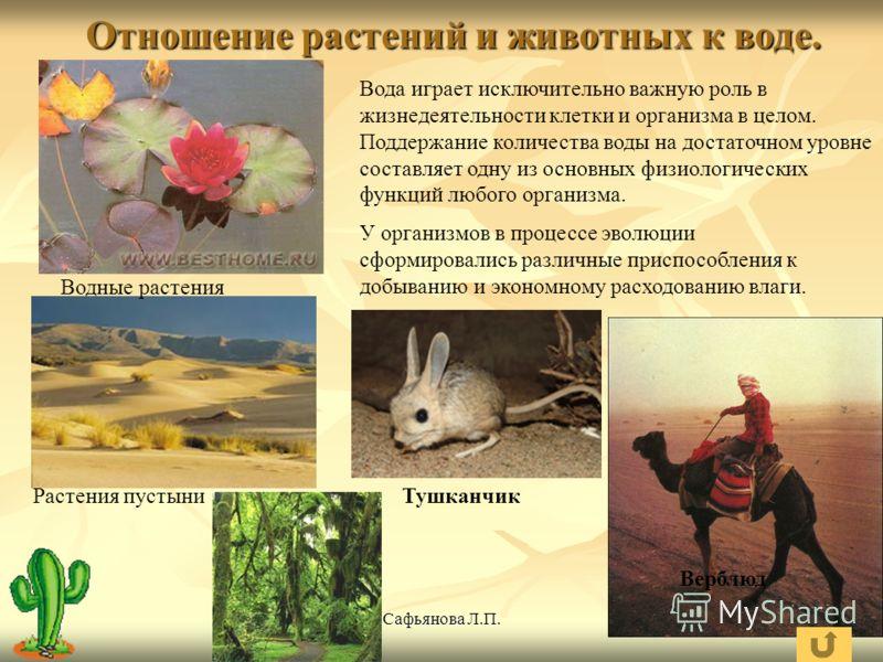 Отношение растений к свету и влаге