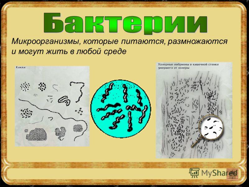 Микроорганизмы, которые питаются, размножаются и могут жить в любой среде