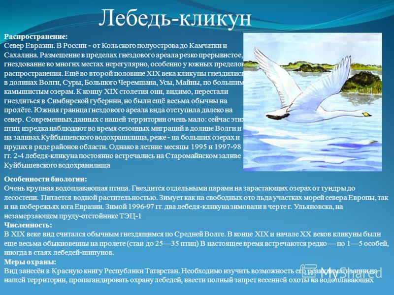 Лебедь - кликун Распространение : Север Евразии. В России - от Кольского полуострова до Камчатки и Сахалина. Размещение в пределах гнездового ареала резко прерывистое, гнездование во многих местах нерегулярно, особенно у южных пределов распространени