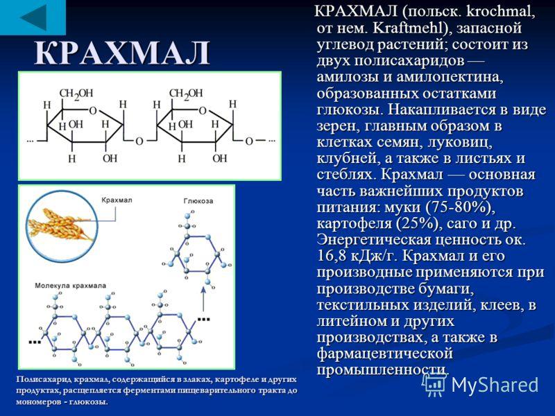КРАХМАЛ КРАХМАЛ (польск. krochmal, от нем. Kraftmehl), запасной углевод растений; состоит из двух полисахаридов амилозы и амилопектина, образованных остатками глюкозы. Накапливается в виде зерен, главным образом в клетках семян, луковиц, клубней, а т