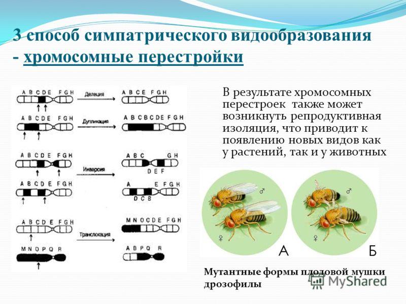 3 способ симпатрического видообразования - хромосомные перестройки В результате хромосомных перестроек также может возникнуть репродуктивная изоляция, что приводит к появлению новых видов как у растений, так и у животных Мутантные формы плодовой мушк