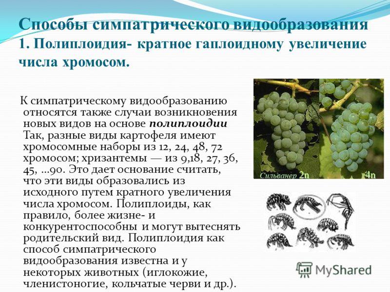 Способы симпатрического видообразования 1. Полиплоидия- кратное гаплоидному увеличение числа хромосом. К симпатрическому видообразованию относятся также случаи возникновения новых видов на основе полиплоидии Так, разные виды картофеля имеют хромосомн