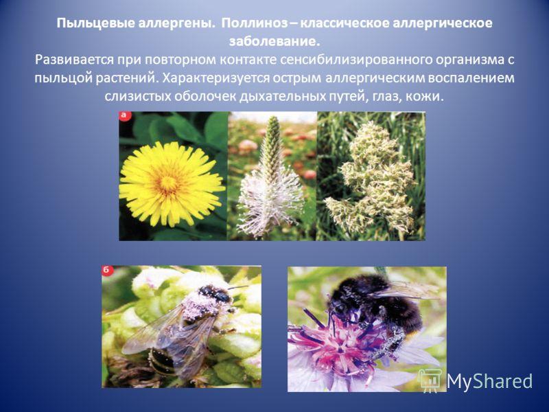 Наиболее распространенные экзоаллергены Бытовые клещи Пыльца луговых трав и деревьев Перхоть домашних животных Плесневые грибки Пыль