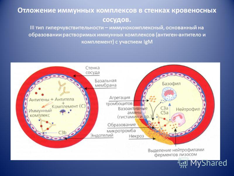 3. Патофизиологическая стадия В местах отложения иммунных комплексов развивается экссудативное воспаление. Происходит альтерация клеток и тканей Клинически это проявляется дерматитами, альвеолитами, генерализованными васкулитами, гломерулонефритами,