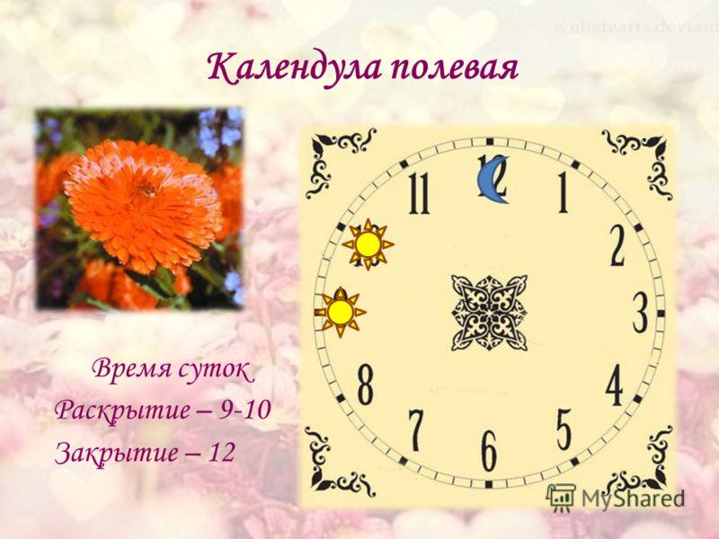 Календула полевая Время суток Раскрытие – 9-10 Закрытие – 12