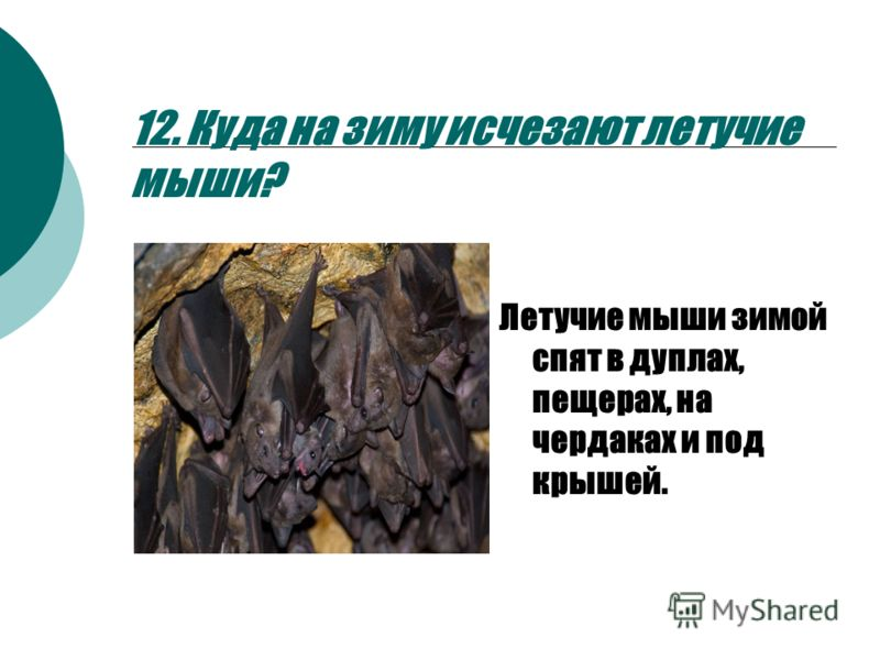 Уральские пельмени почему ушел