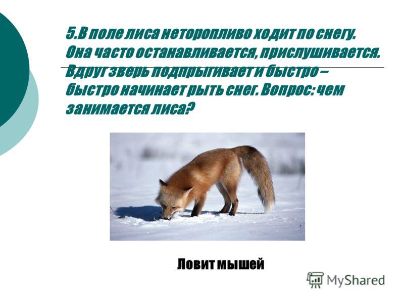 5.В поле лиса неторопливо ходит по снегу. Она часто останавливается, прислушивается. Вдруг зверь подпрыгивает и быстро – быстро начинает рыть снег. Вопрос: чем занимается лиса? Ловит мышей
