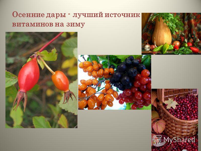 Осенние дары - лучший источник витаминов на зиму