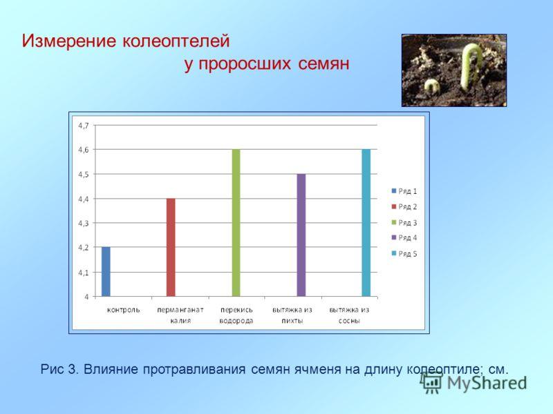 Измерение колеоптелей у проросших семян Рис 3. Влияние протравливания семян ячменя на длину колеоптиле; см.