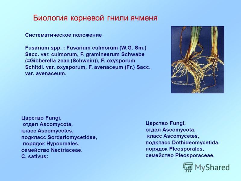 Биология корневой гнили ячменя Царство Fungi, отдел Ascomycota, класс Ascomycetes, подкласс Dothideomycetida, порядок Pleosporales, семейство Pleosporaceae. Систематическое положение Fusarium spp. : Fusarium culmorum (W.G. Sm.) Sacc. var. culmorum, F
