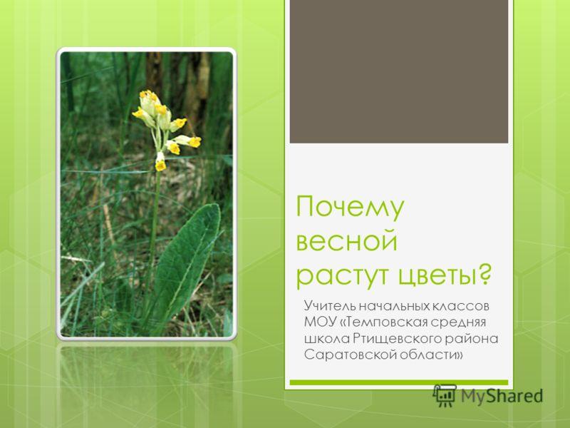 Почему весной растут цветы? Учитель начальных классов МОУ «Темповская средняя школа Ртищевского района Саратовской области»