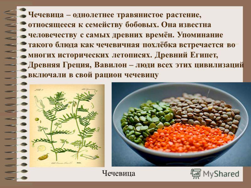 Чечевица Чечевица – однолетнее травянистое растение, относящееся к семейству бобовых. Она известна человечеству с самых древних времён. Упоминание такого блюда как чечевичная похлёбка встречается во многих исторических летописях. Древний Египет, Древ
