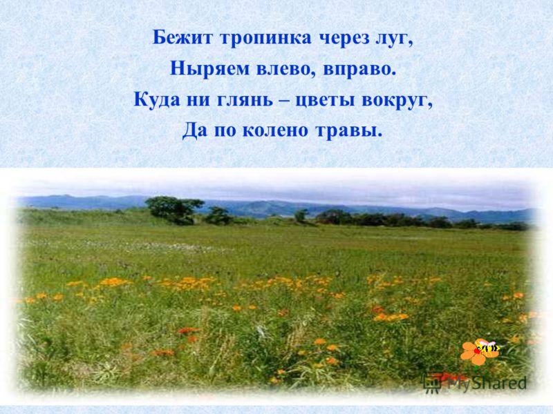 Бежит тропинка через луг, Ныряем влево, вправо. Куда ни глянь – цветы вокруг, Да по колено травы.