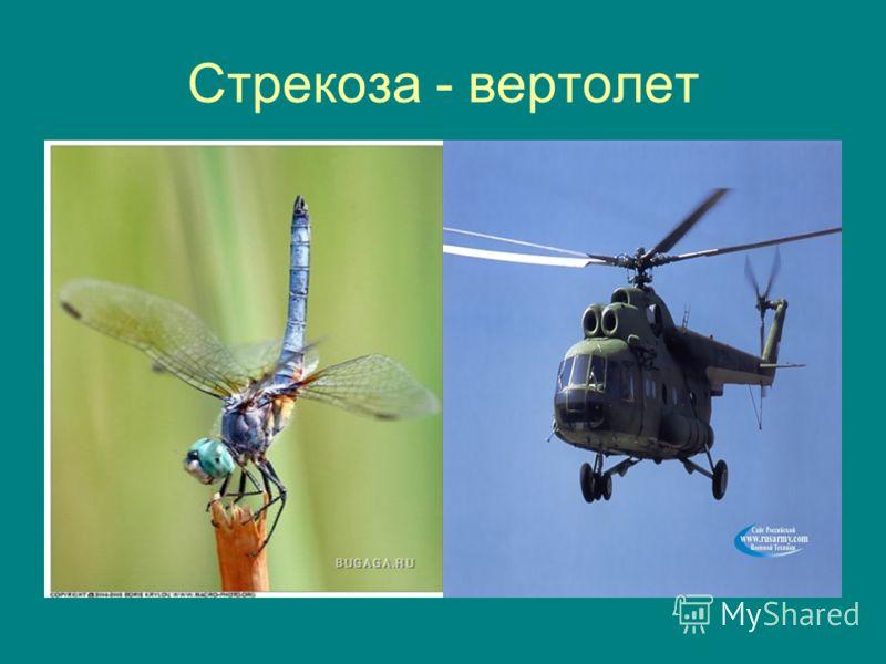 Стрекоза - вертолет