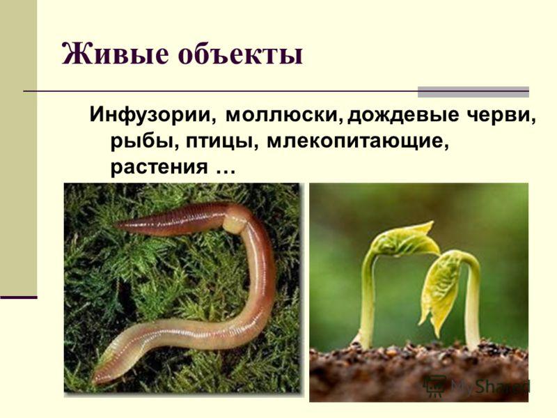 Живые объекты Инфузории, моллюски, дождевые черви, рыбы, птицы, млекопитающие, растения …