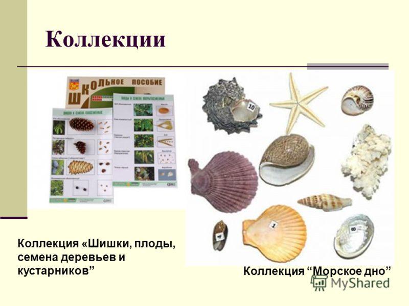 Коллекции Коллекция «Шишки, плоды, семена деревьев и кустарников Коллекция Морское дно