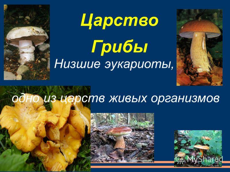 Царство Грибы Низшие эукариоты, одно из царств живых организмов