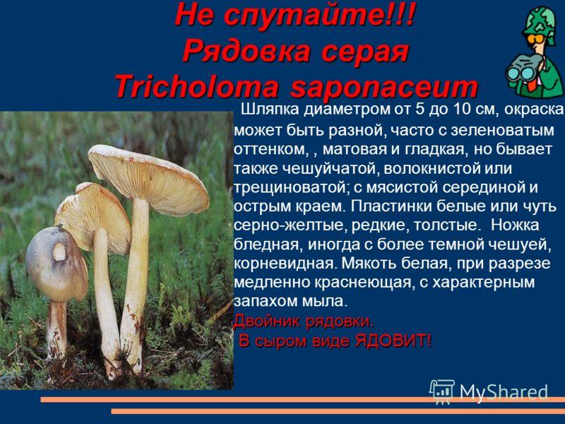 Не спутайте!!! Рядовка серая Tricholoma saponaceum Шляпка диаметром от 5 до 10 см, окраска может быть разной, часто с зеленоватым оттенком,, матовая и гладкая, но бывает также чешуйчатой, волокнистой или трещиноватой; с мясистой серединой и острым кр